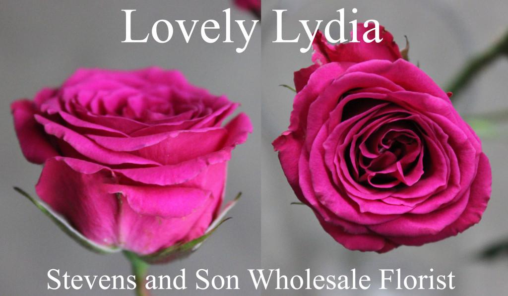 Lovely Lydia - Photo Credit Allison Linder