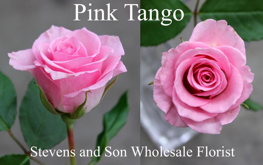 Pink Tango - Photo Credit Allison Linder