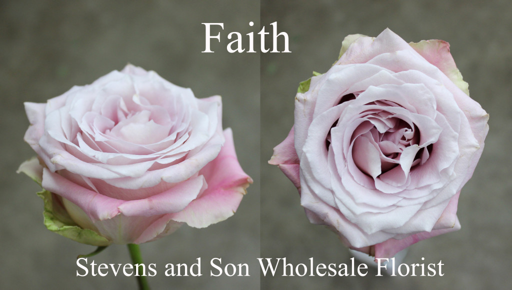 Faith - Photo Credit Allison Linder