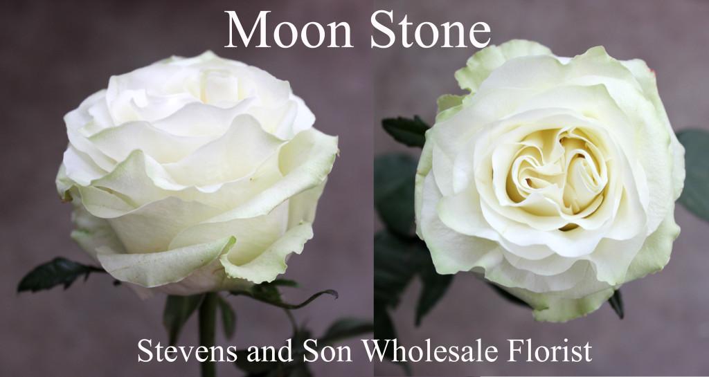 Moon Stone - Photo Credit Allison Linder