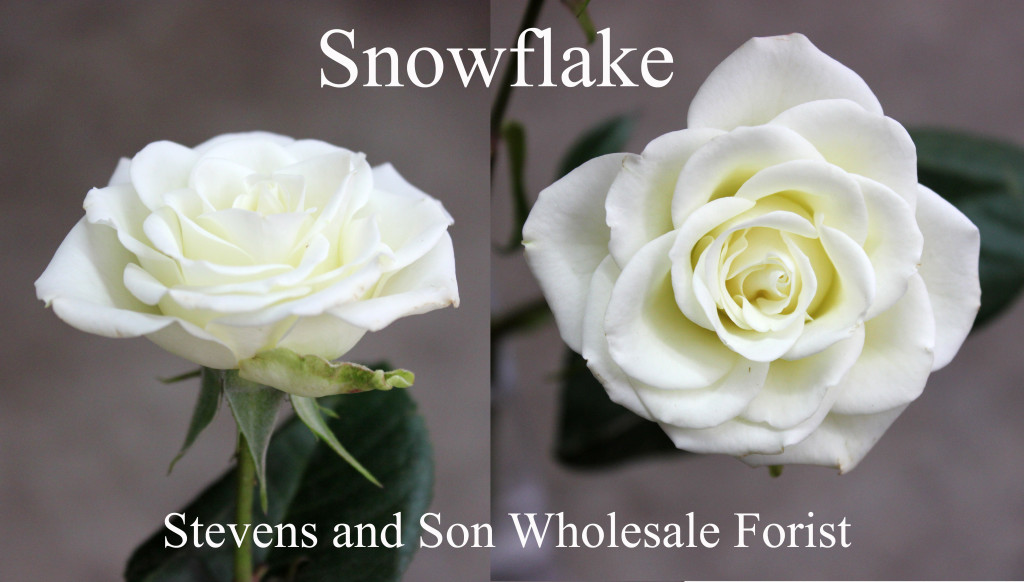 SNowflake - Photo Credit Allison Linder