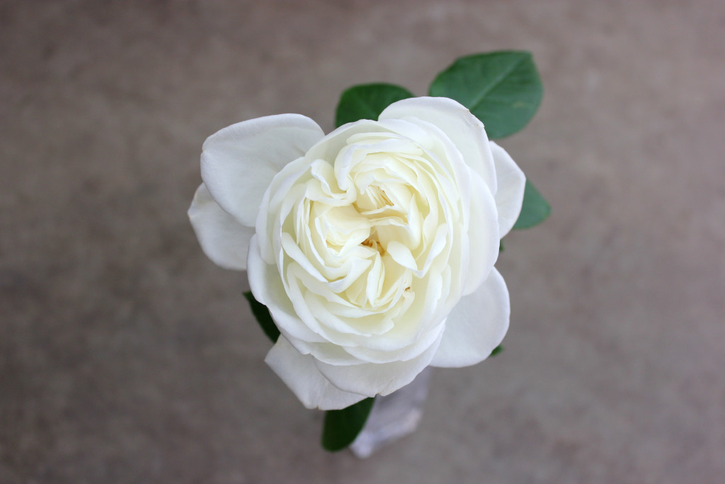 Blanc de Blancs - Aerial - Photo Credit Allison Linder