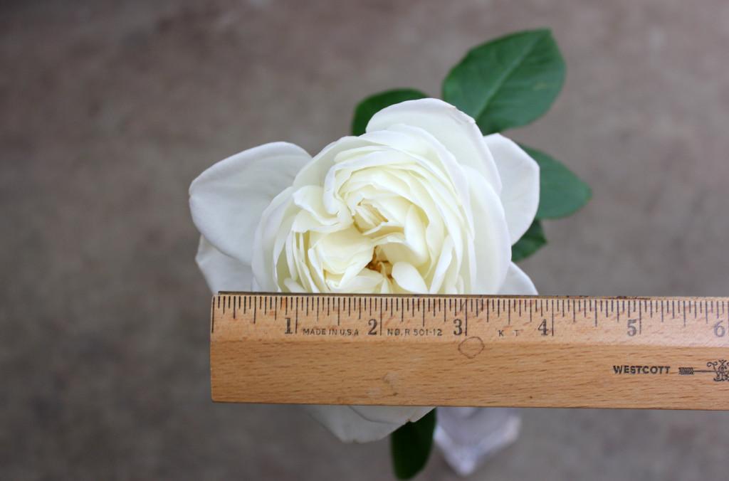 Blanc de Blancs - Measured - Photo Credit Allison Linder