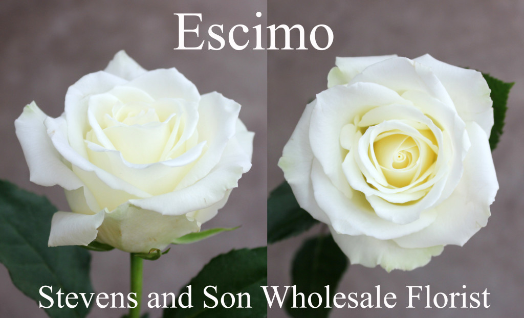 Escimo - Photo Credit Allison Linder