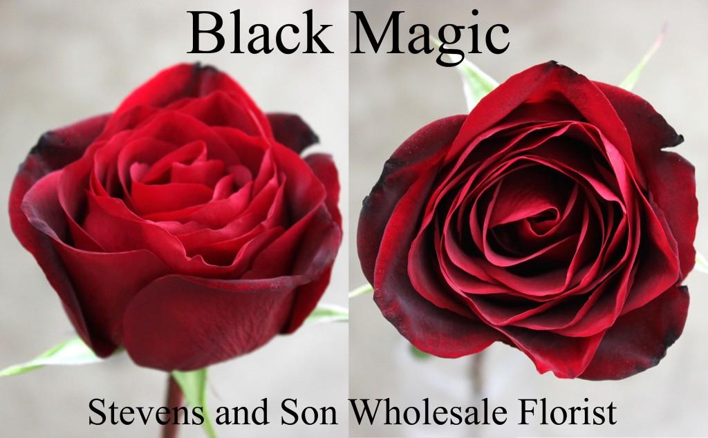 Black Magic - Photo Credit Allison Linder