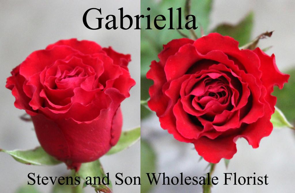 Garbiella - Photo Credit Allison Linder