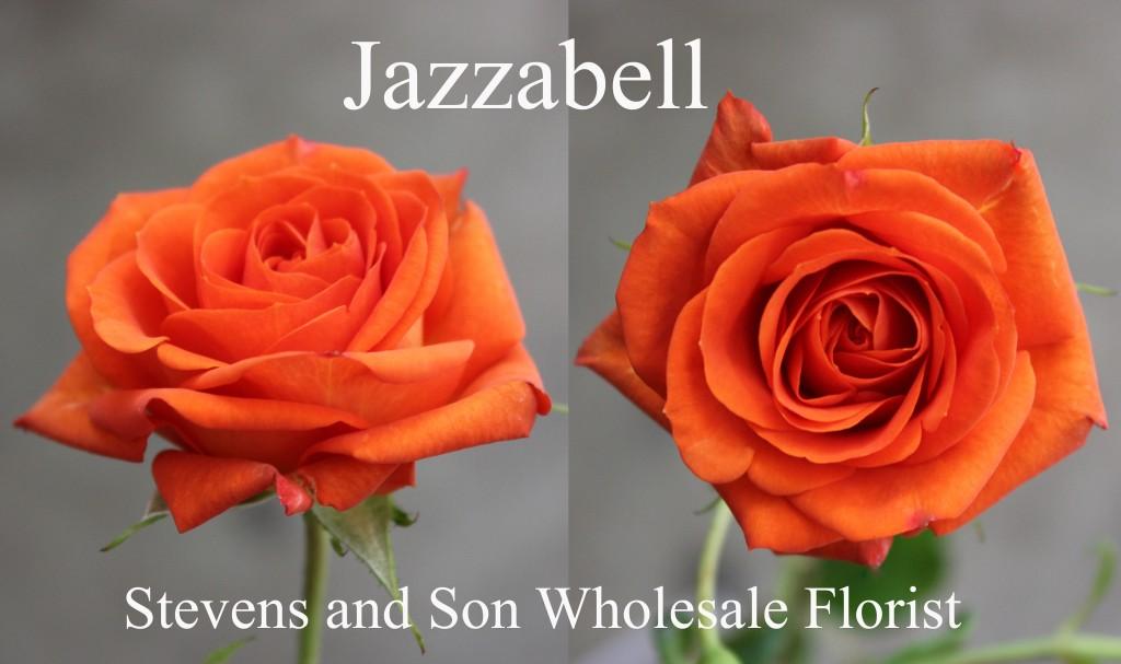 Jazzabell - Photo Credit Allison Linder copy