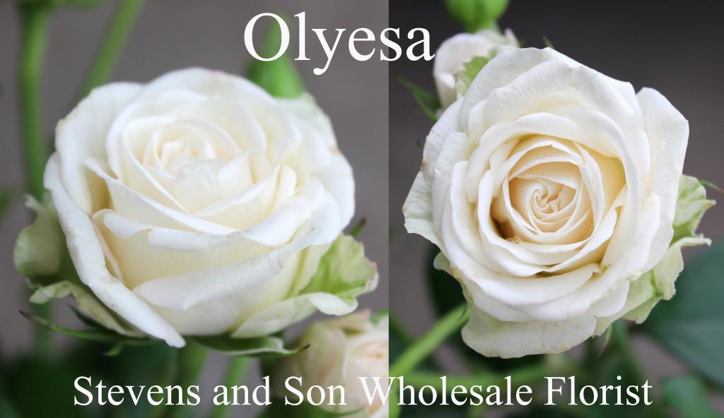 Olyesa - Photo Credit Allison Linder copy