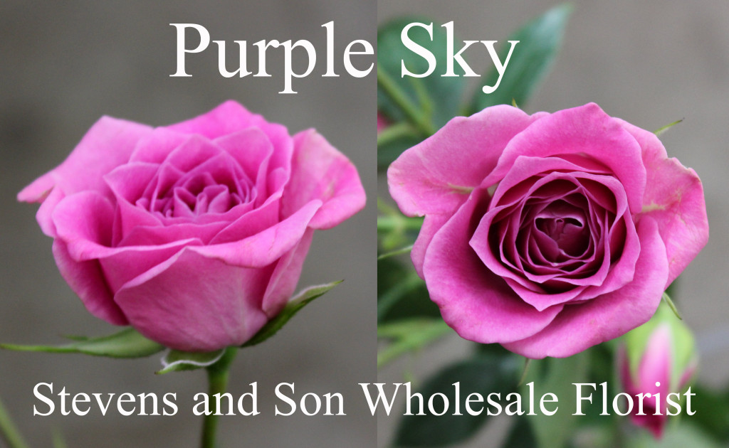 Purple Sky - Photo Credit Allison Linder