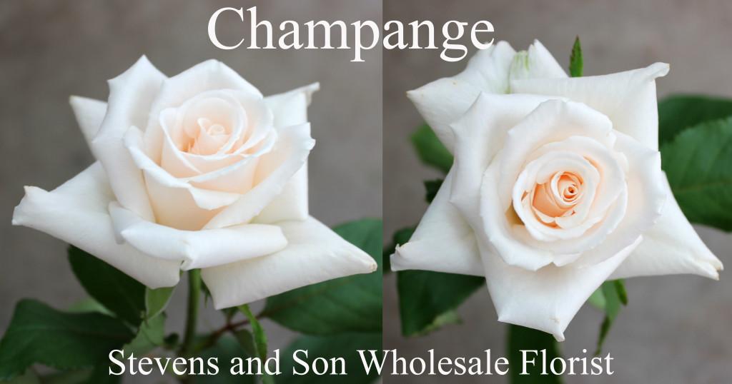 Champagne - Photo Credit Allison Linder copy