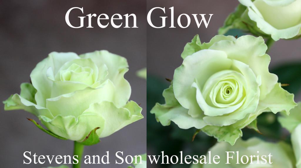 Green Glow - Photo Credit Allison Linder