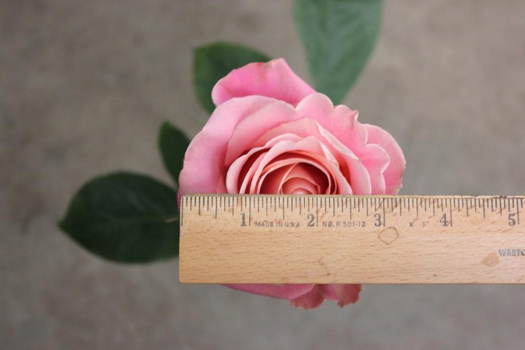 Hermosa - Measured - Photo Credit Allison Linder