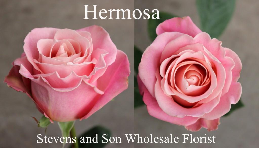 Hermosa - Photo Credit Allison Linder