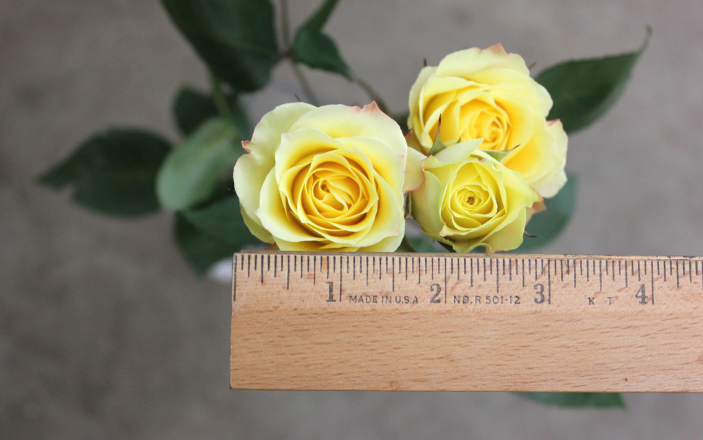 Limoncello - Measured - Photo Credit Allison Linder
