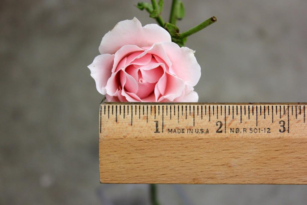 Odilia - Measured - Photo Credit Allison Linder