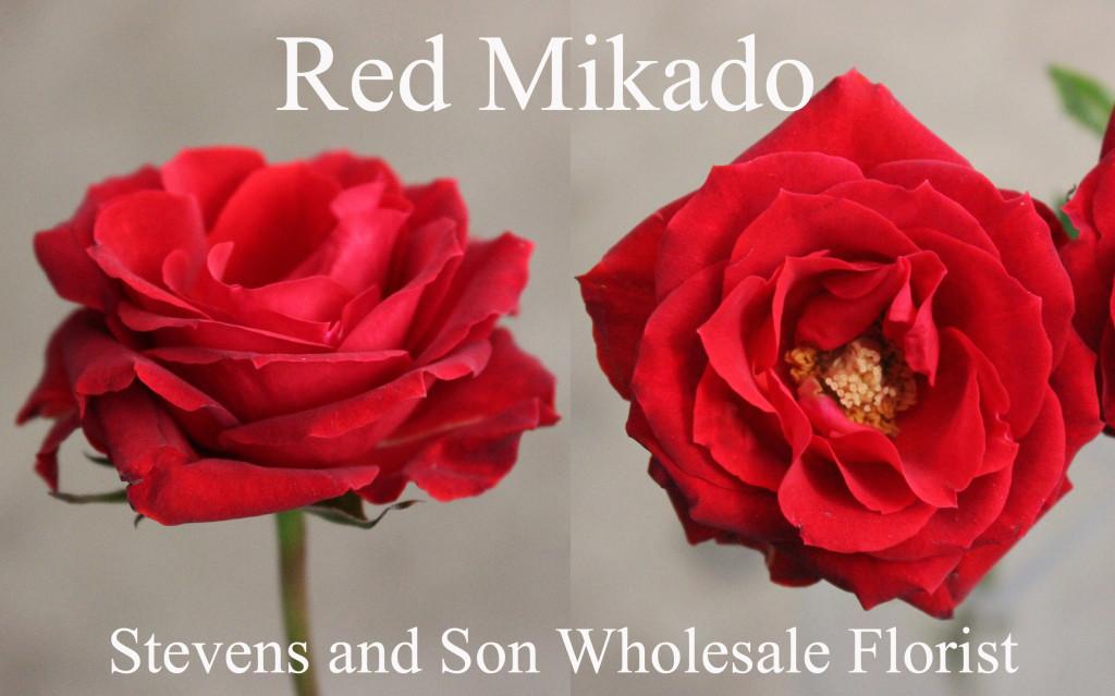 Red Mikado - Photo Credit Allison Linder