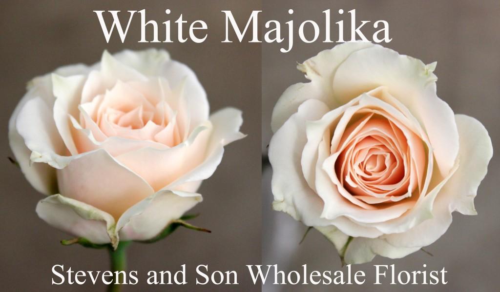 White Majolika - Photo Credit Allison Linder