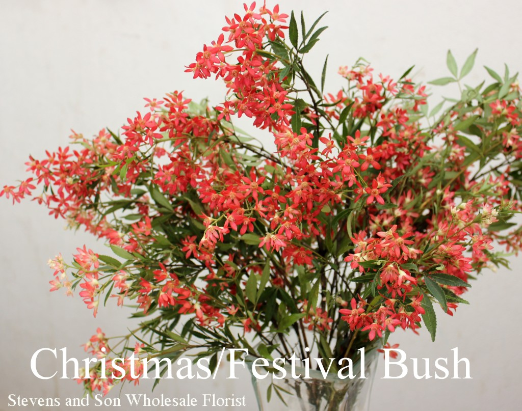 Christmas/Festival Bush