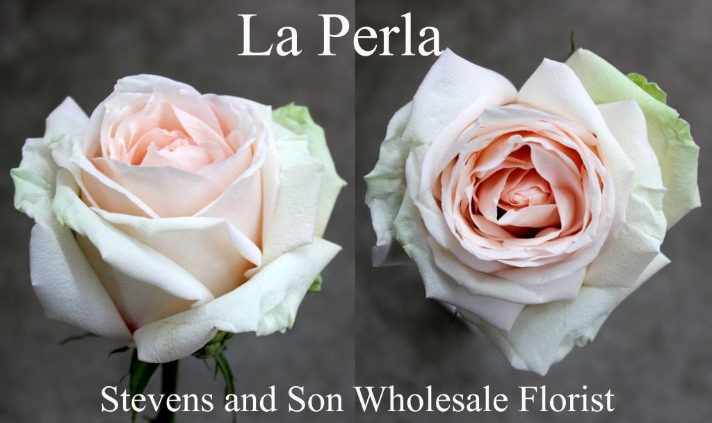 La Perla - Photo Credit Allison Linder