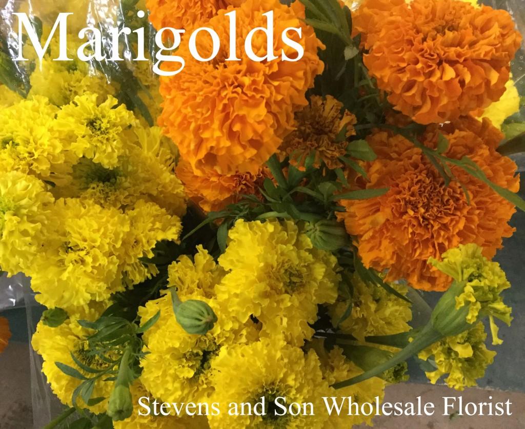 Marigolds - Photo Credit Allison Linder