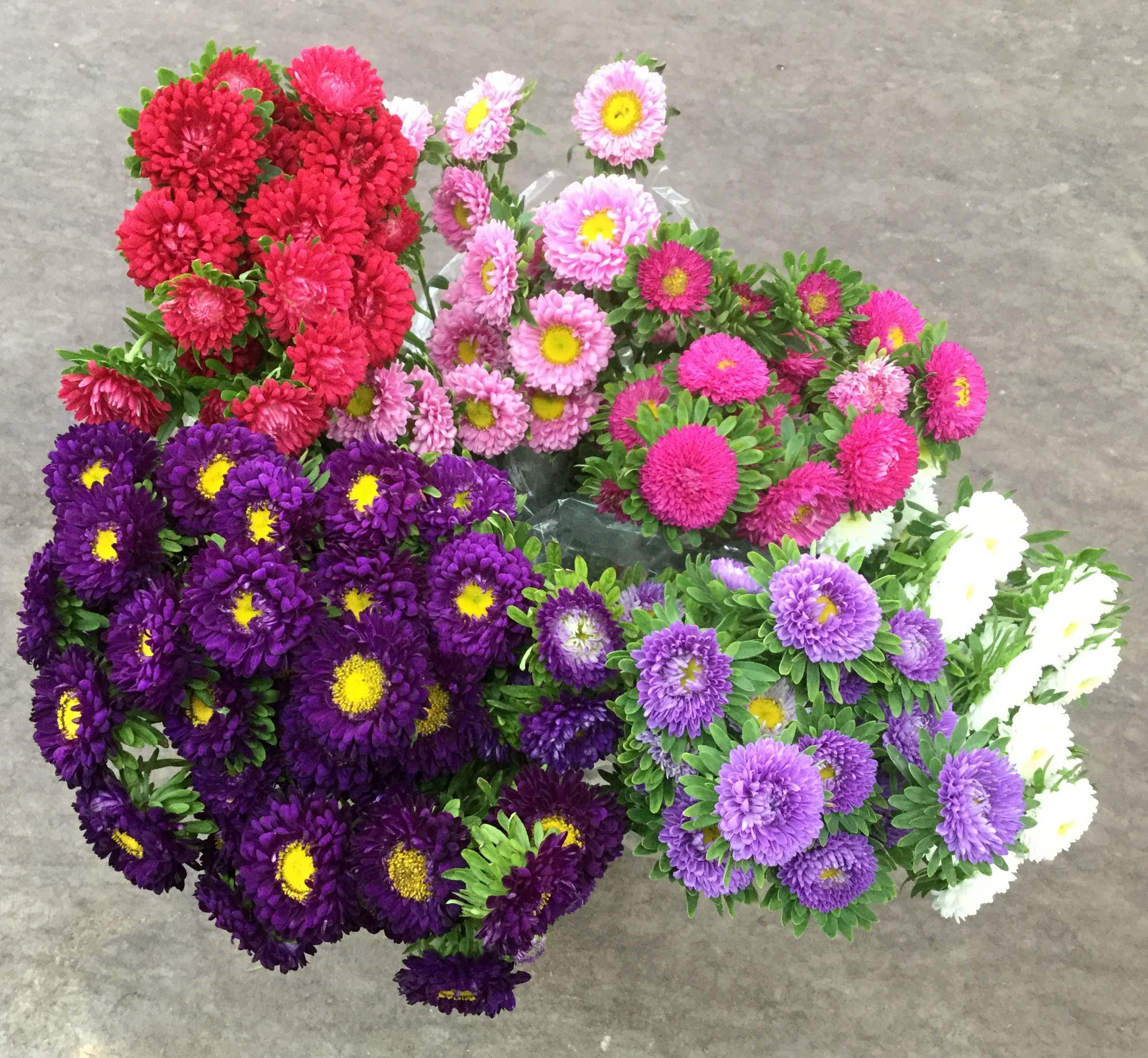 Matsumoto Asters Stevens And Son Wholesale Florist
