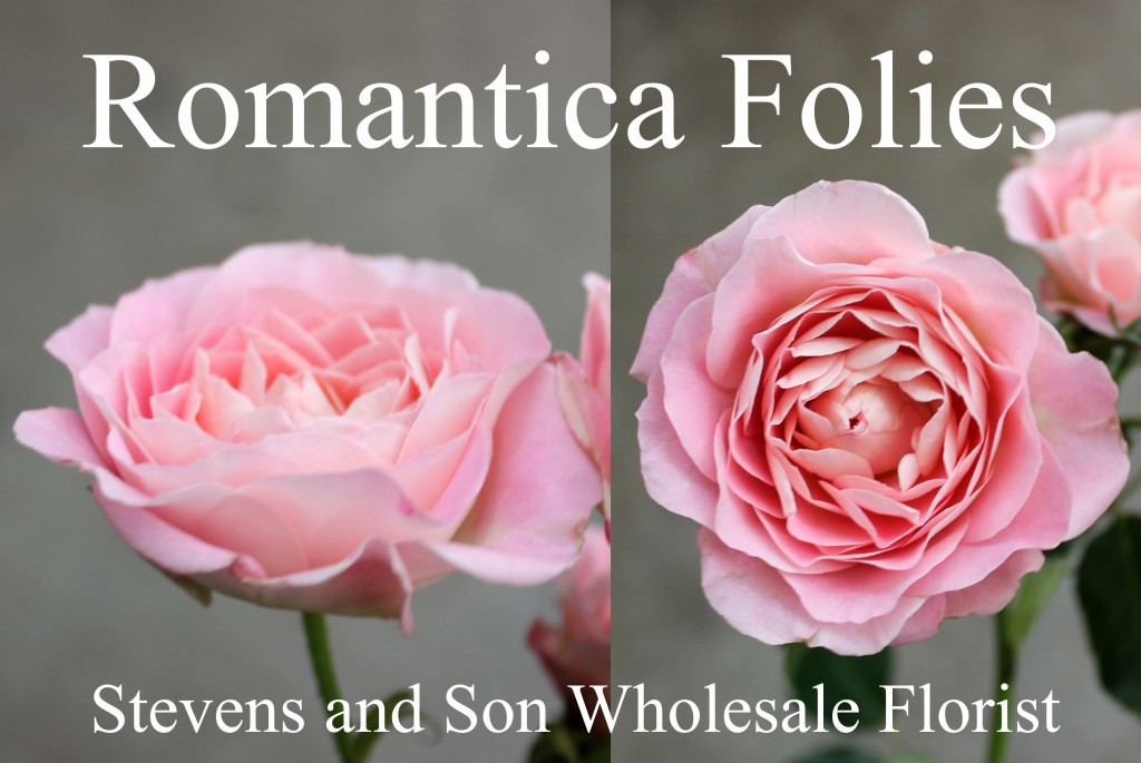 Romantica Folies - Photo Credit Allison Linder