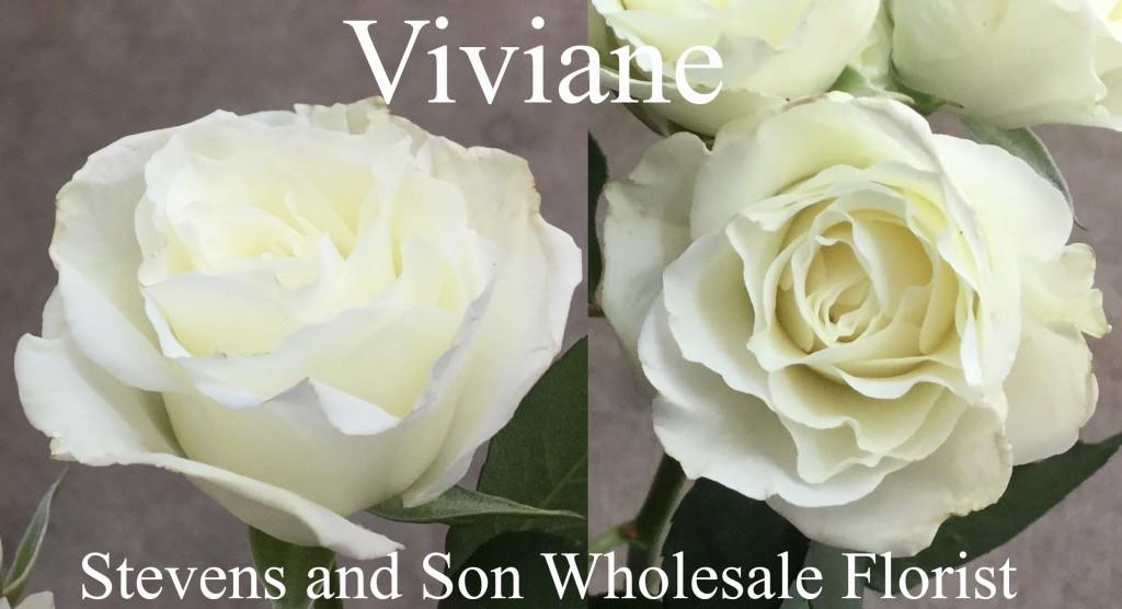 Viviane - Photo Credit Allison Linder
