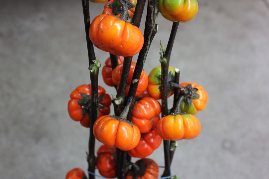 Pumpkin Tree - Detail - Photo Credit Allison Linder