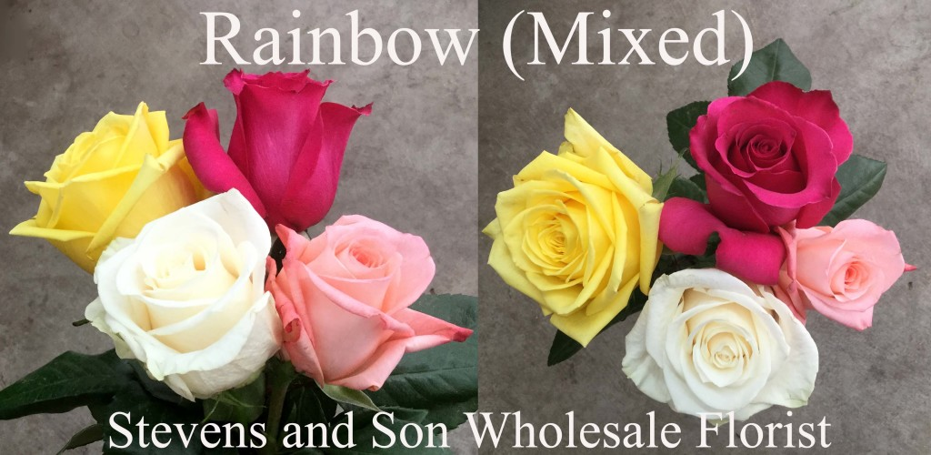 Rainbow (Mixed) - Photo Credit Allison Linder