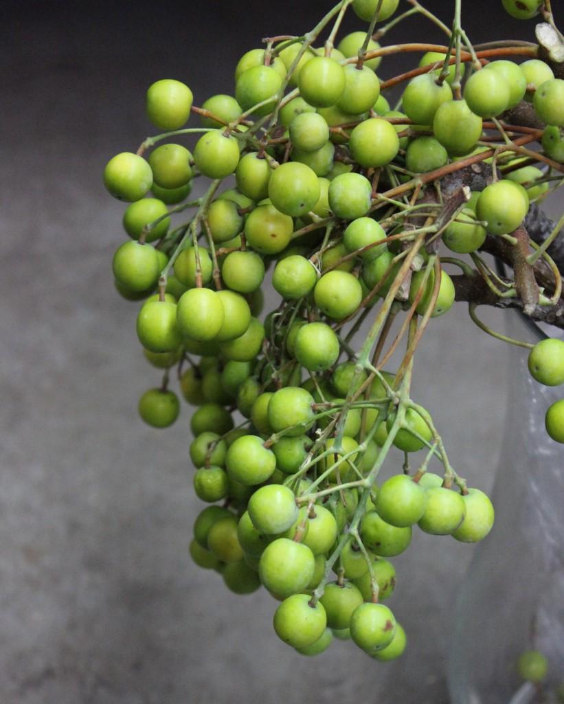 China Berry - Side - Photo Credit Allison Linder