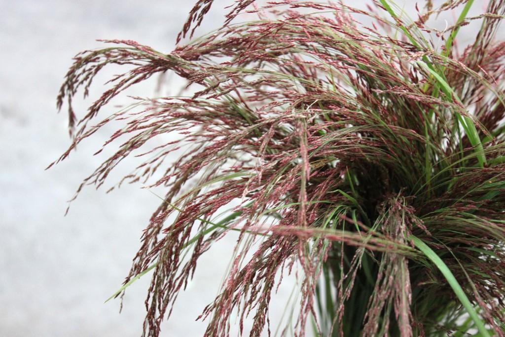 Love Grass - Detail - Photo Credit Allison Linder