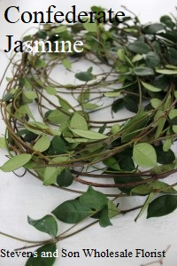 Confederate-Jasmine-3-200x300
