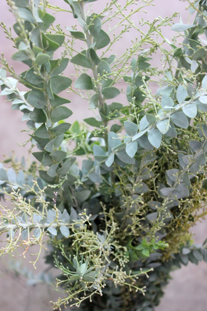 Knifeblade Acacia - Detail - Photo Credit Allison Linder