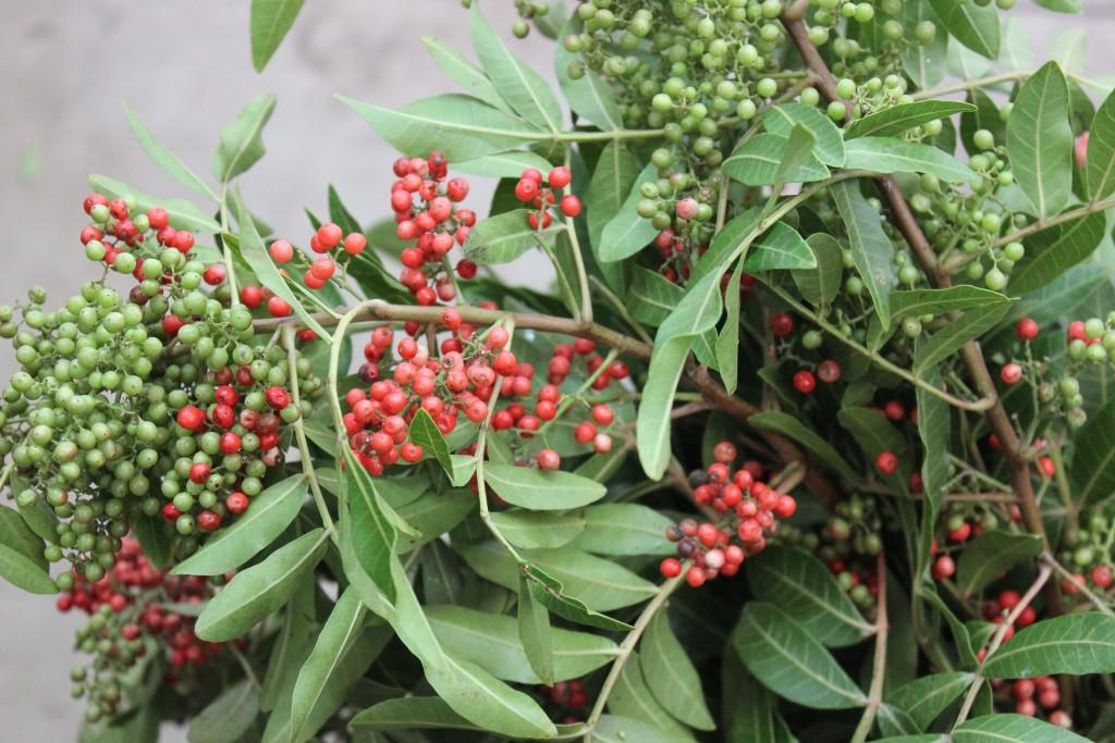 Pepperberry Upright - Berry Detail - Photo Credit Allison Linder