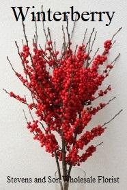 Winterberry-Bunch-186x300