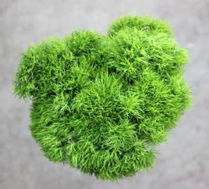 Green Trick Dianthus - Aerial - Photo credit Allison Linder