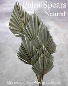 Palm Spears - Natural - Photo Credit Allison Linder