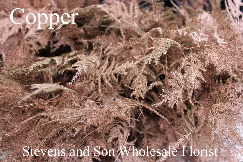 Color Enhanced Plumosa - Copper - Photo Credit Allison Linder