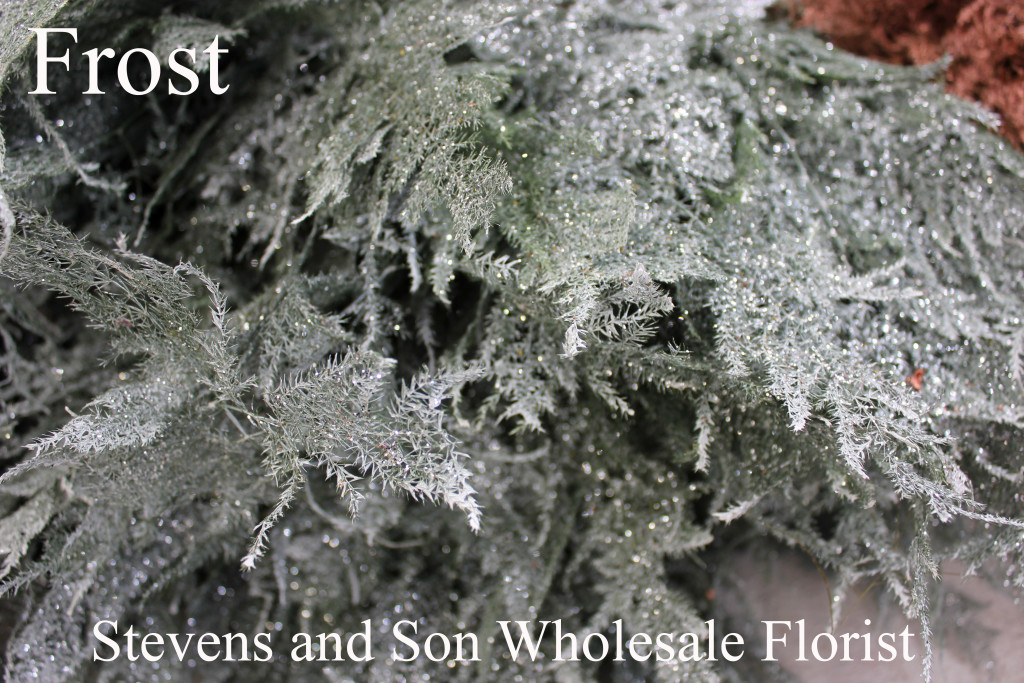 Color Enhanced Plumosa - Frost - Photo Credit Allison Linder