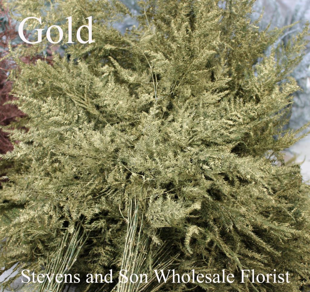 Colored Enhanced Plumosa - Gold - Photo Credit Allison Linder