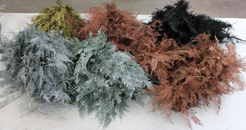 Colored Enhanced Plumosa - Group - Photo Credit Allison Linder