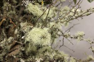 Mossy Branch - Detail 1 - Photo Credit Allison Linder