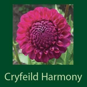 Cryfeild Harmony