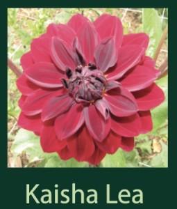 Kaisha Lea