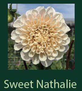 Sweet Nathalie